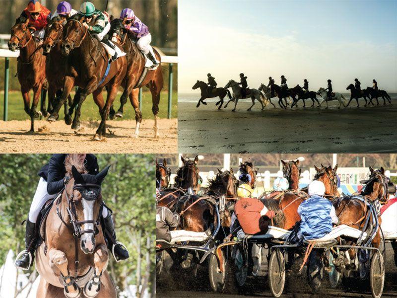 AGRI HORSE DEPUIS 2000 À VOS CÔTÉS !
